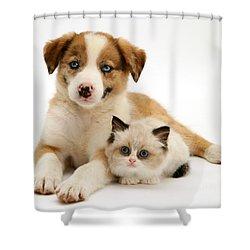 Border Collie And Birman-cross Kitten Shower Curtain by Jane Burton