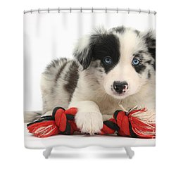 Border Collie Pup Shower Curtain by Mark Taylor