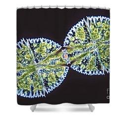 Micrasterias Denticulata Shower Curtain by M. I. Walker