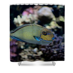Tropical Fish Shower Curtain by Carol Ailles