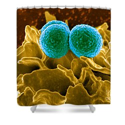 Methicillin-resistant Staphylococcus Shower Curtain by Science Source
