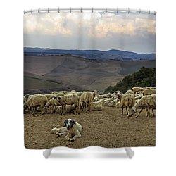 Flock Of Sheep Shower Curtain by Joana Kruse
