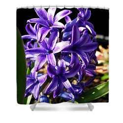 Shower Curtain featuring the photograph Hyacinth Named Peter Stuyvesant by J McCombie