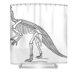 Iguanodon, Mesozoic Dinosaur Shower Curtain by Science Source