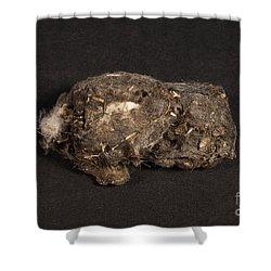Owl Pellet Shower Curtain by Ted Kinsman