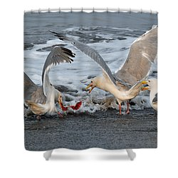 Seagulls Shower Curtain by Debra  Miller