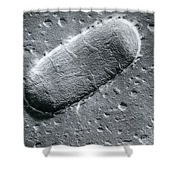 Tuberculosis Bacillum Shower Curtain by Science Source