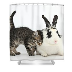 Kitten And Rabbit Shower Curtain by Mark Taylor