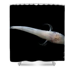 Alabama Cavefish Shower Curtain by Dante Fenolio