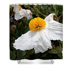 Along Big Sur Shower Curtain by Carol Ailles