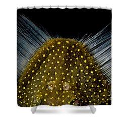 Amazon River Catfish Shower Curtain by Dante Fenolio