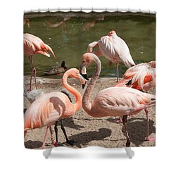 Flamingos Shower Curtain by Carol Ailles