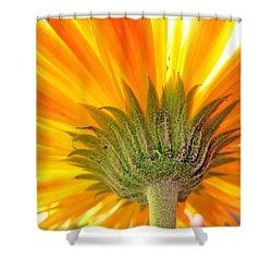 6008c Shower Curtain by Kimberlie Gerner