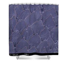 Shark Skin, Sem Shower Curtain by Ted Kinsman