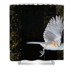 Tufted Titmouse In Flight Shower Curtain by Ted Kinsman