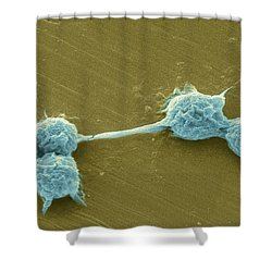 Water Biofilm With H. Vermiformis Cysts Shower Curtain by Science Source