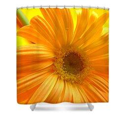 7321-007 Shower Curtain by Kimberlie Gerner