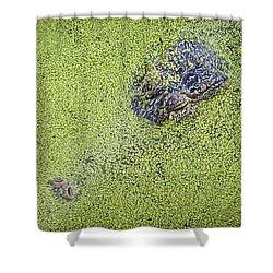 Alligator Untitled Shower Curtain by Patrick M Lynch