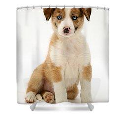 Border Collie Puppy Shower Curtain by Jane Burton