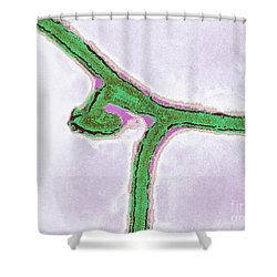 Marburg Virus, Tem Shower Curtain by Science Source