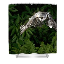Tufted Titmouse In Flight Shower Curtain