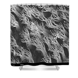 Gecko Foot Pads Shower Curtain by Ted Kinsman