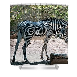 Lincoln Park Zoo In Chicago Shower Curtain by Carol Ailles
