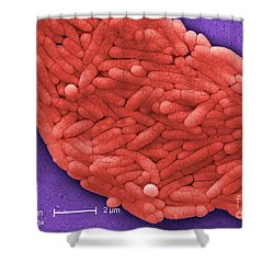Salmonella, Sem Shower Curtain by Science Source