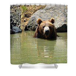 A Bear's Hot Tub Shower Curtain by Methune Hively