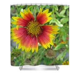 A Beautiful Blanket Flower Shower Curtain by Ashish Agarwal
