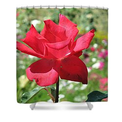 A Beautiful Red Flower Growing At Home Shower Curtain by Ashish Agarwal