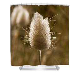 A Beautiful Seed Pod With Beautiful Sun Reflection Shower Curtain