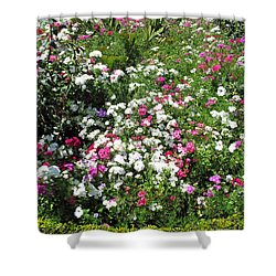 A Bed Of Beautiful Different Color Flowers Shower Curtain by Ashish Agarwal