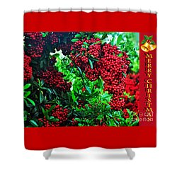 A Berry Merry Christmas Shower Curtain by Kaye Menner