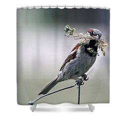 Shower Curtain featuring the photograph A Bird And A Twig by Elizabeth Winter