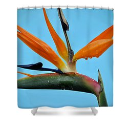 A Bird By The Pool Shower Curtain