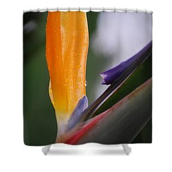 A Bird Of Paradise I Shower Curtain