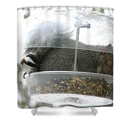 Shower Curtain featuring the photograph A Bit Crowded by Rory Sagner
