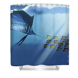 A Blue Marlin Swims After A School Shower Curtain by Corey Ford