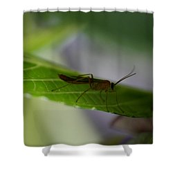 A Bugs Life Shower Curtain