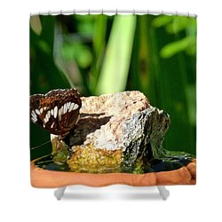 A Butterfly Enjoys A Drink Shower Curtain by Will Borden
