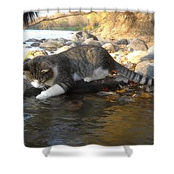 A Cat Goes Fishing Shower Curtain
