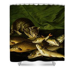 A Cat With Trout Perch And Carp On A Ledge Shower Curtain by Stephen Elmer