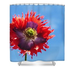 A Colorful Flower With Red And Purple Shower Curtain by John Short