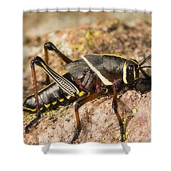 A Colorful Lubber Grasshopper Shower Curtain by Jack Goldfarb