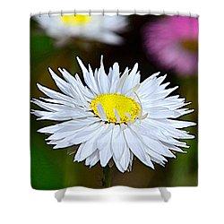 A Daisy Shower Curtain by Martina Fagan