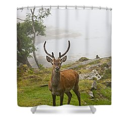 A Deer Stands In A Foggy Meadow By The Shower Curtain by John Short