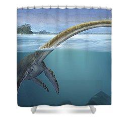 A Elasmosaurus Platyurus Swims Freely Shower Curtain by Sergey Krasovskiy