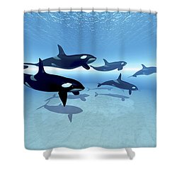 A Family Of Killer Whales Search Shower Curtain by Corey Ford
