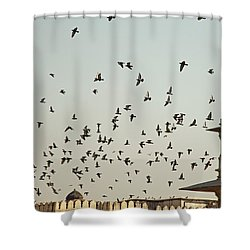 A Flock Of Pigeons Crowding One Of The Structures On Top Of The Red Fort Shower Curtain by Ashish Agarwal